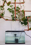 Synergy: Irrigation System by Allyssa Clements